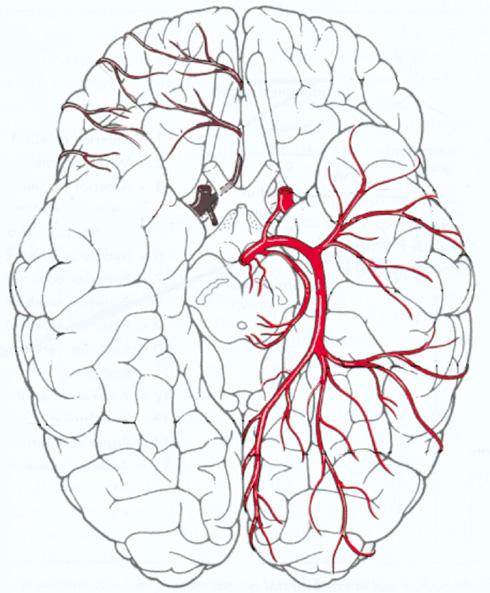 Image Result For Medecine